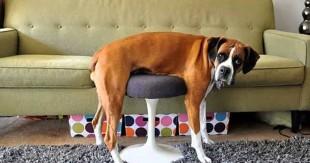 une chien
