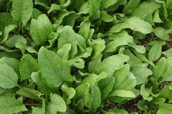 spinach-506616_960_720