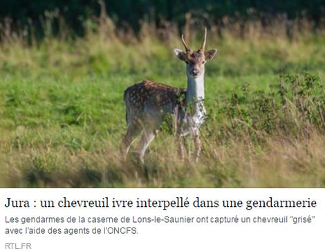 jura chevreuil bourre_resultat