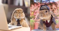 lapin-style-instagram-puipui