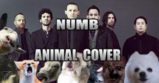 numbanimal