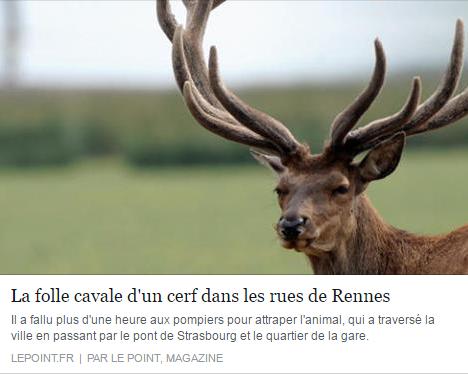 rennes cerf