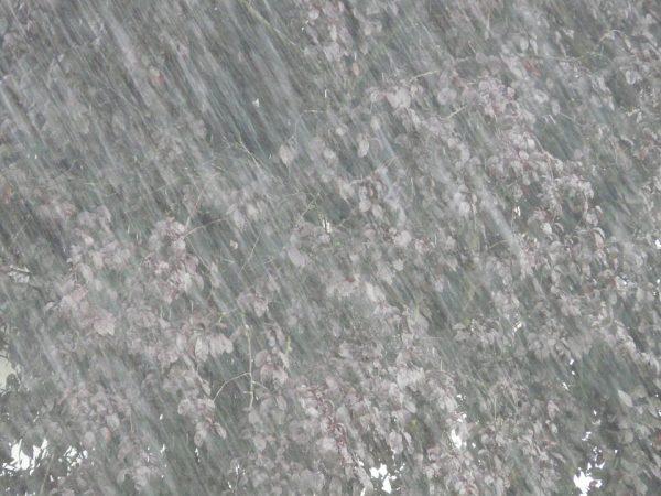 downpour-8823_960_720