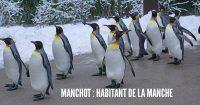 king-penguin-1154432_960_720