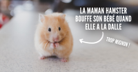 une_animaux_mamans