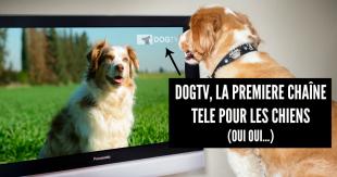 DogTV