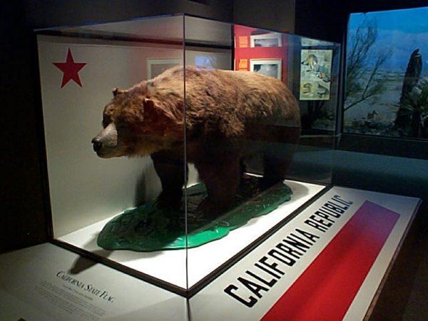 Monarch_the_bear