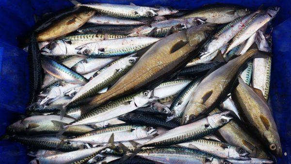 fish-879341_960_720