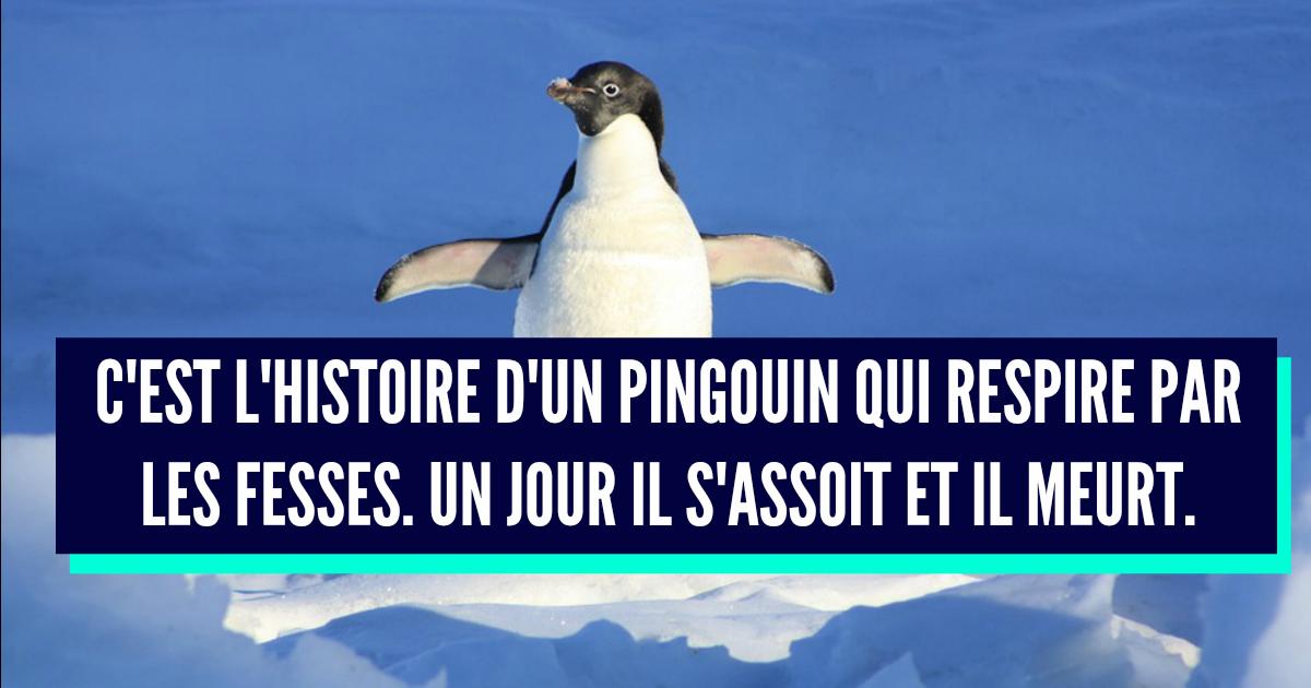 blague 7 nains pingouin