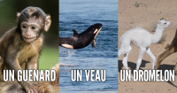 une_beben_animaux