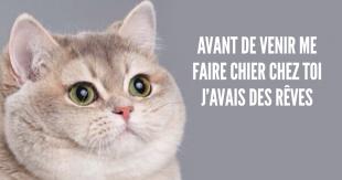 une_phrases_chat