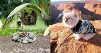 chat-camping