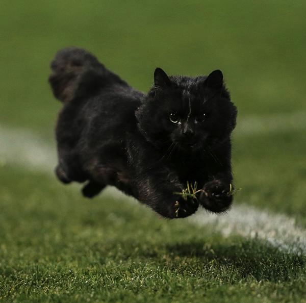 flying-cat-rugby-game-photoshop-battle-original-image