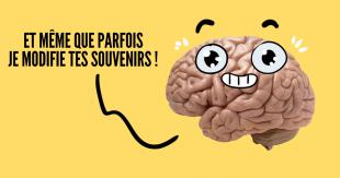 une_cerveau