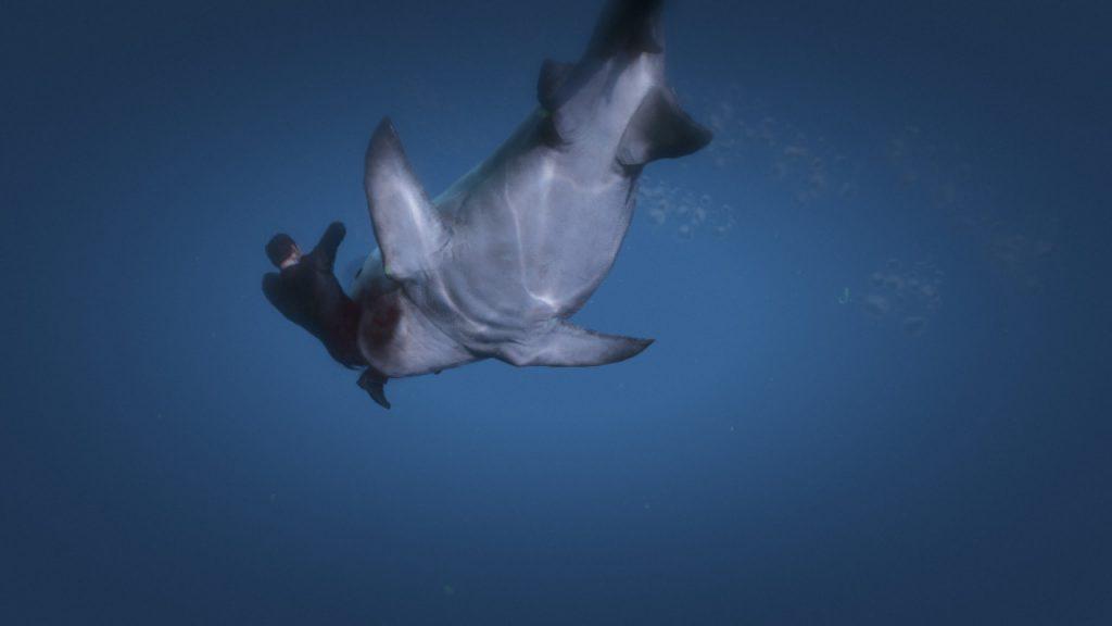Shark_beast_eat
