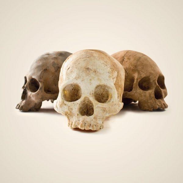 chocolate-skulls_7567