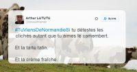 cows-975976_960_720