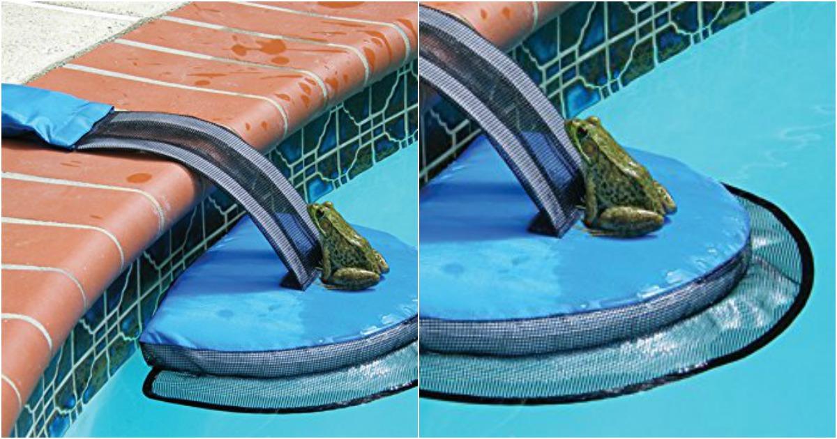 Une petite passerelle pour sauver les grenouilles dans la for Piscine amazone