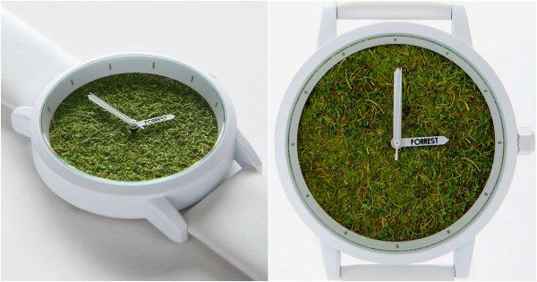 montre herbe