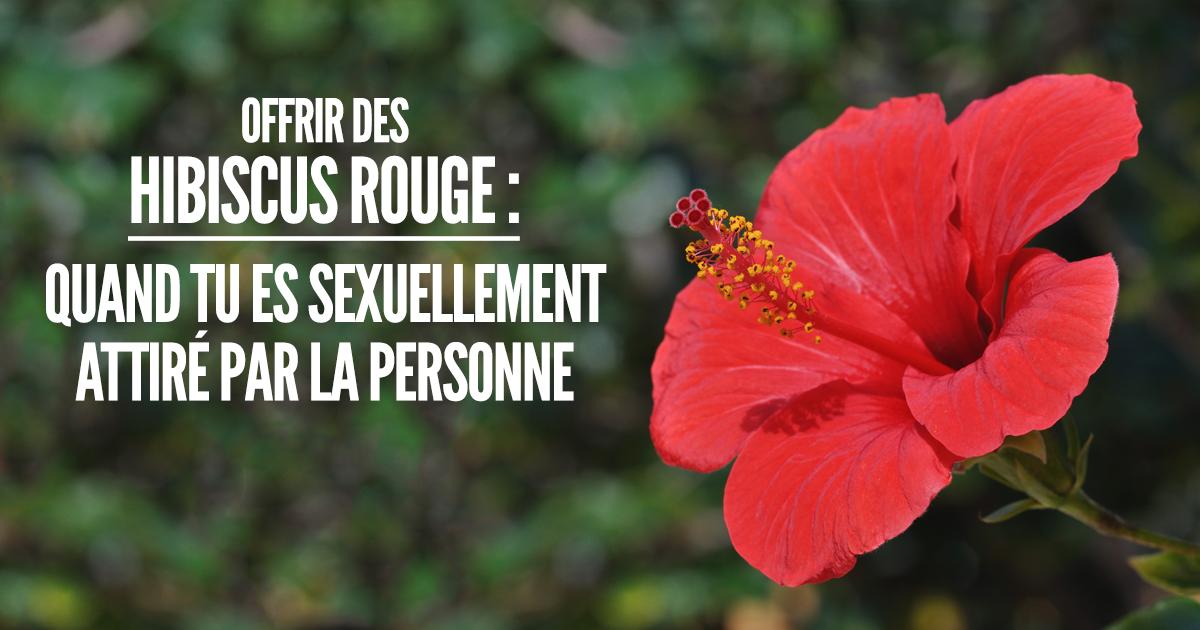 Top 10 Des Fleurs Et De Leurs Significations Pour Ne Pas Offrir N