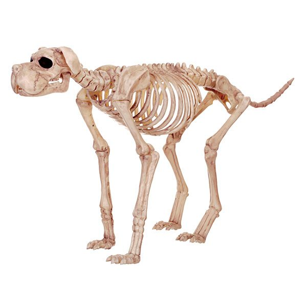 jhuh_large_standing_skeleton_dog