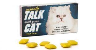 talk-cat