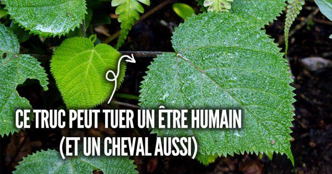 une-plante