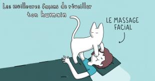 une-chat