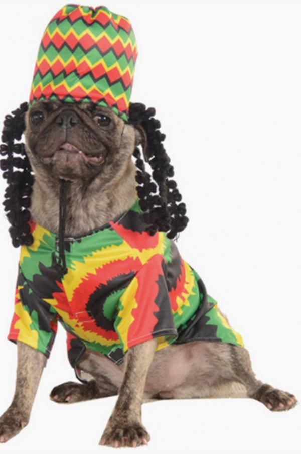 Top 90+ des accessoires pour chiens les plus cools