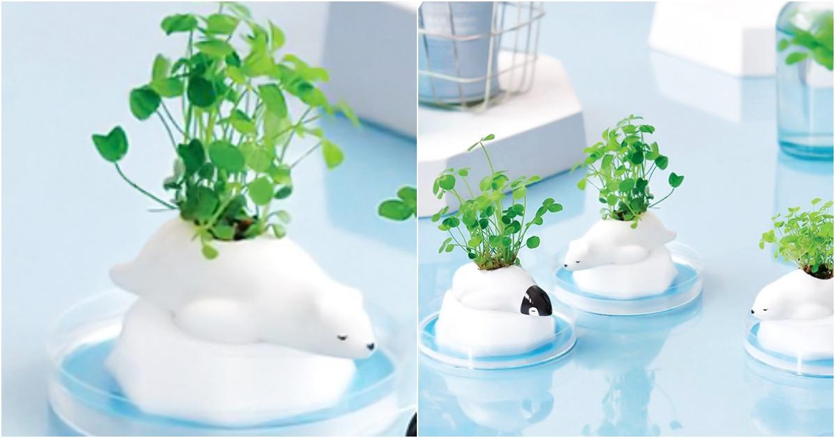 des petits animaux polaires pour faire pousser des plantes topito. Black Bedroom Furniture Sets. Home Design Ideas