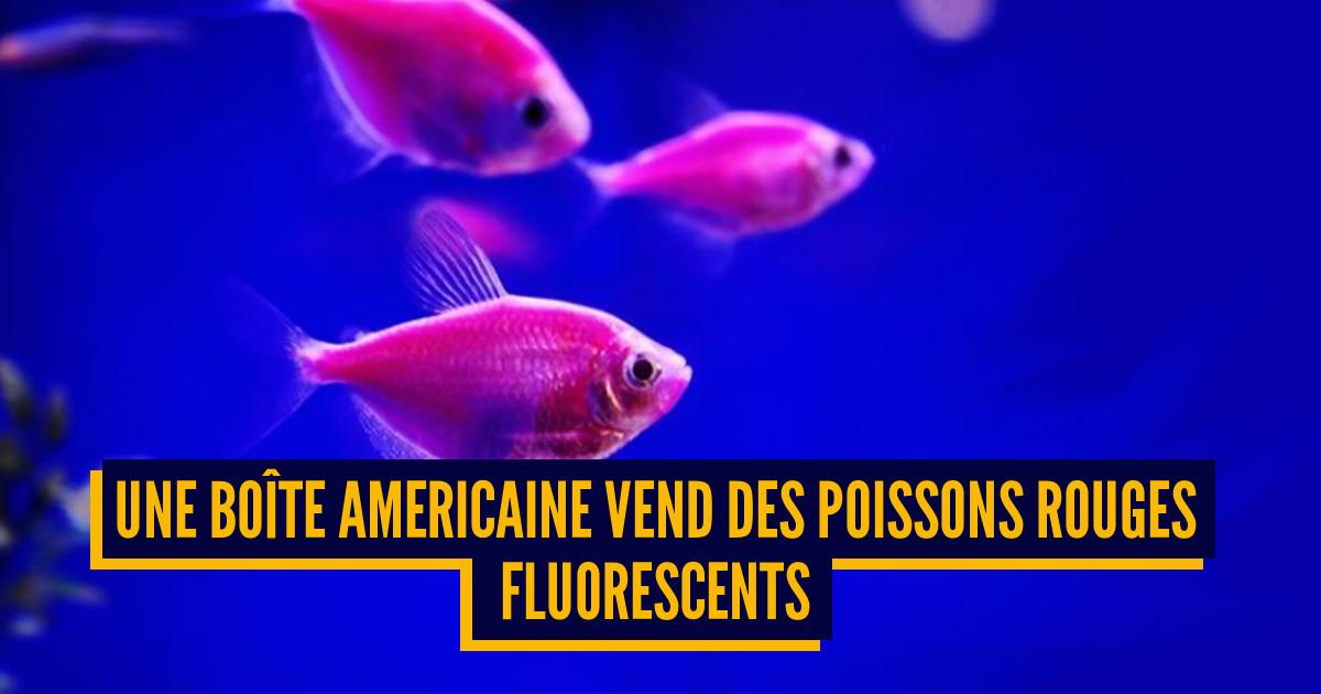 Top 7 des animaux g n tiquement modifi es par l 39 homme for Nourriture poisson rouge super u