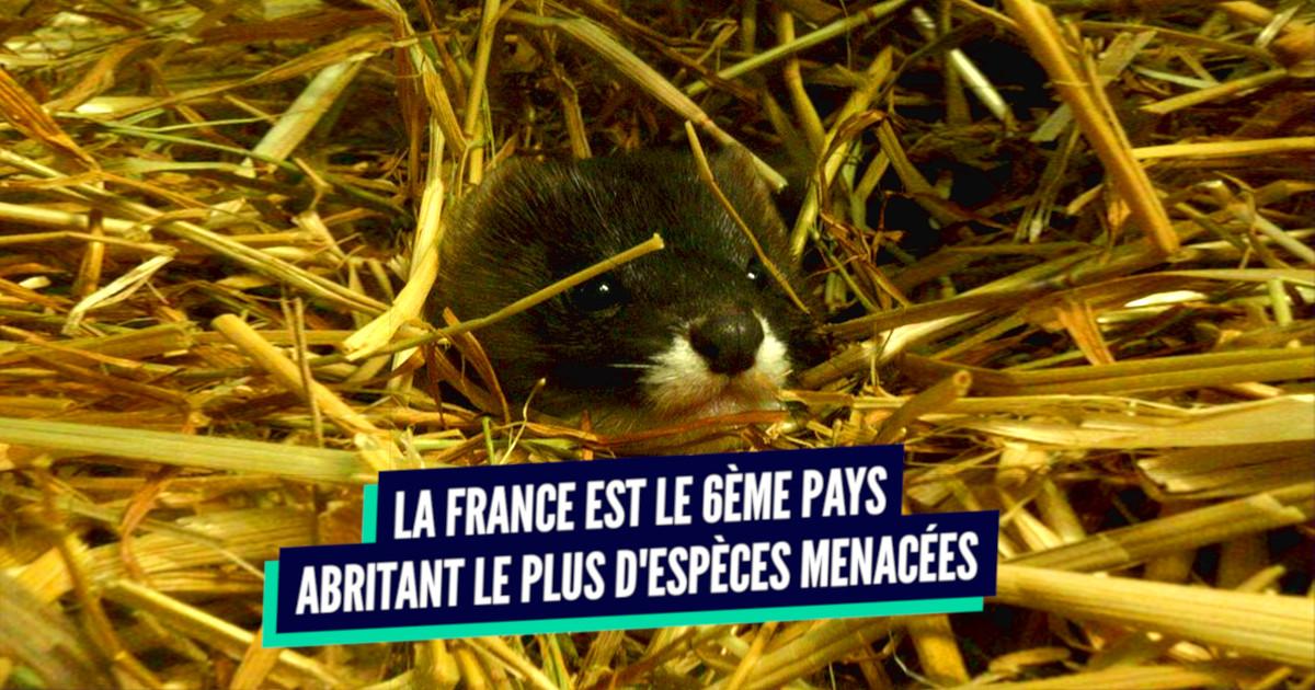 78d02b890f55b Top 10 des pays où il y a le plus d animaux en voie de disparition ...