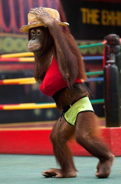 monkey-bikini_resultat