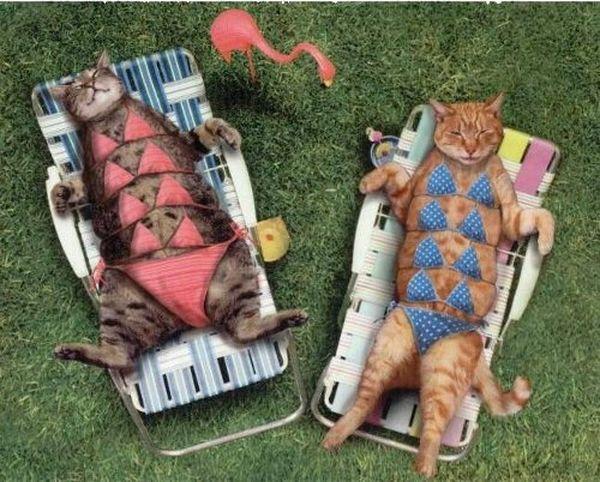 pets-in-bikinis-1_resultat