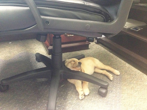 sleeping-puppy-13__605