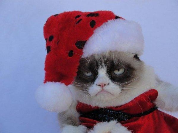 grumpy3