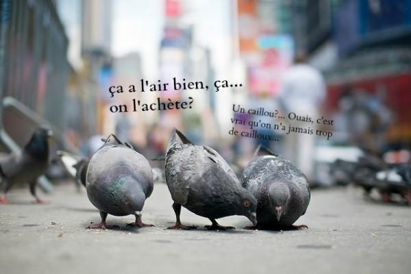 pigeons23