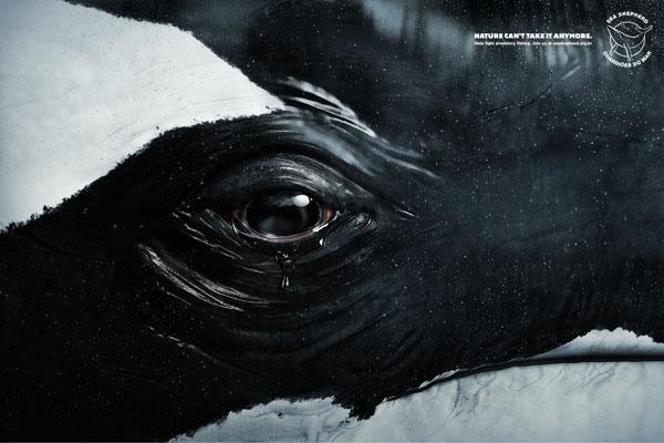 tears-whale