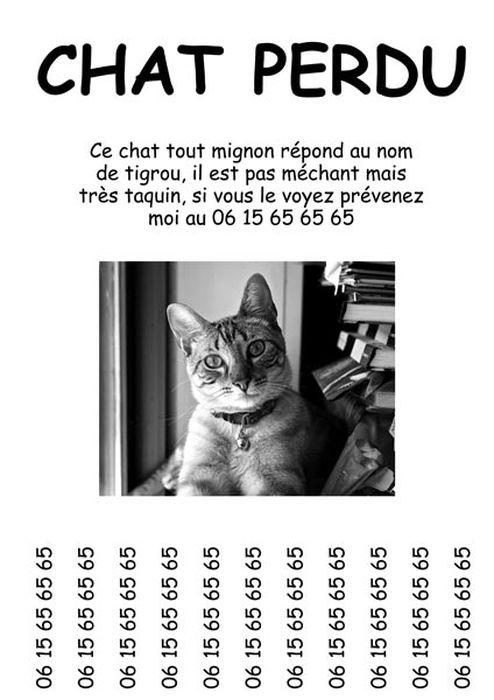 Affiche-chat_resultat