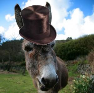 Donkey wearing a hat