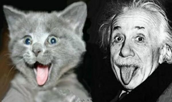 une chat chiens intelligents