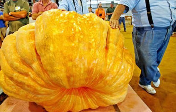 a422_pumpkin_resultat