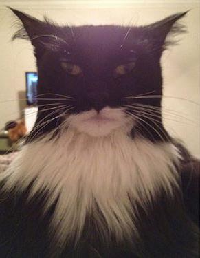 BatmanChat