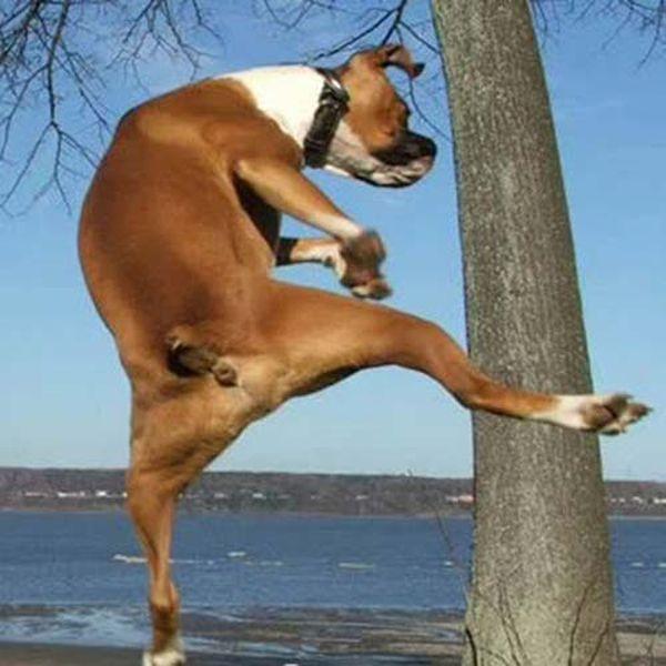 chien-ninja_resultat