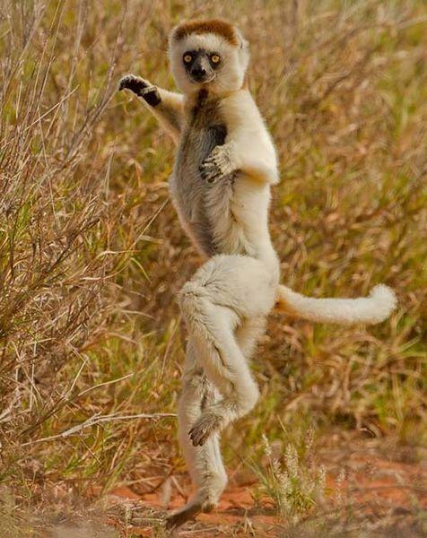 lemurien-ninja_resultat