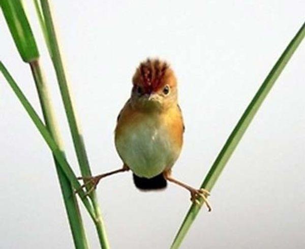 oiseau-ninja-e1414676745792_resultat