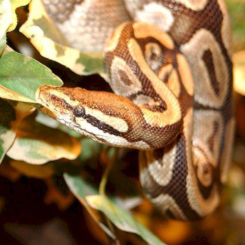 python_resultat