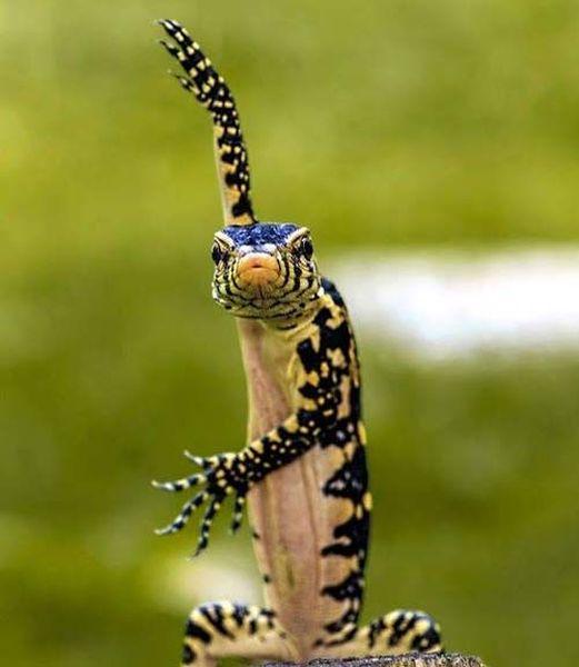 reptile-ninja_resultat