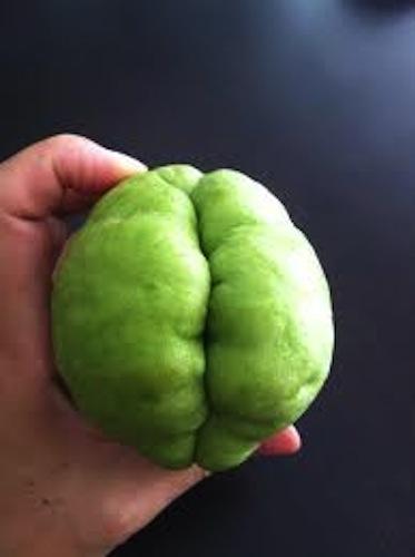 fruitpenis20