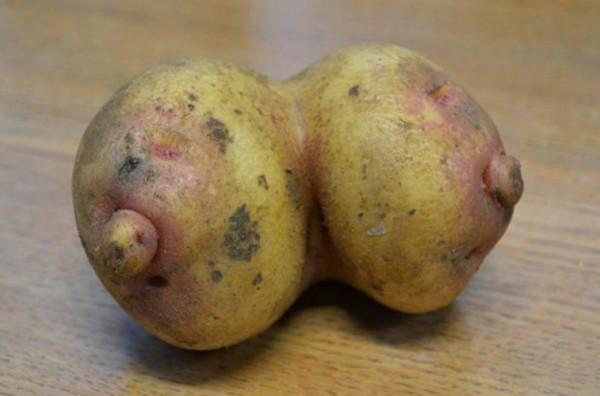 fruitpenis9